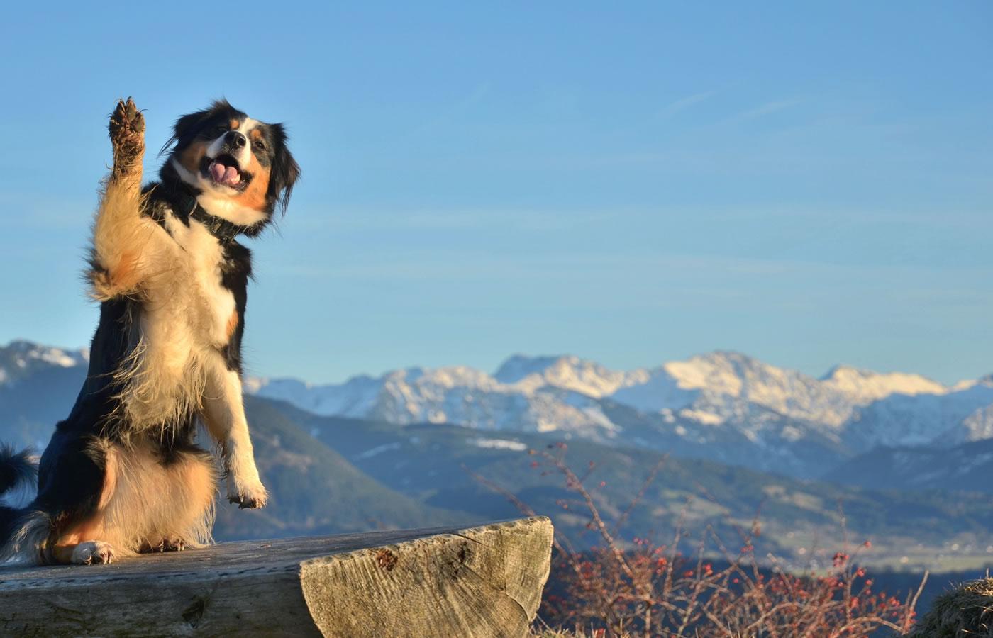Urlaubmit Hund im Natürlich. Hotel mit Charakter in Fiss, Tirol.