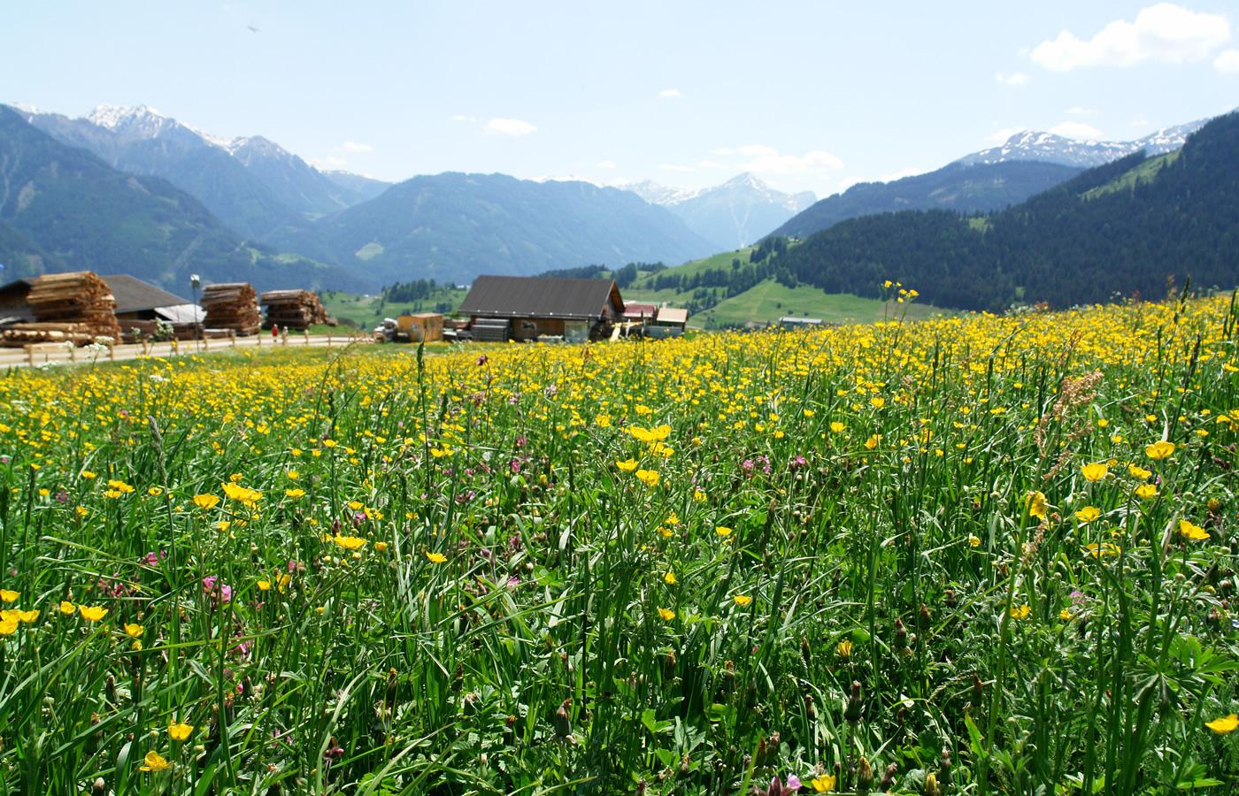 Blumenwiese in Fiss, Tirol. Sommer-Urlaub in Österreich.